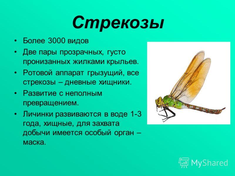 Стрекозы Более 3000 видов Две пары прозрачных, густо пронизанных жилками крыльев. Ротовой аппарат грызущий, все стрекозы – дневные хищники. Развитие с неполным превращением. Личинки развиваются в воде 1-3 года, хищные, для захвата добычи имеется особ