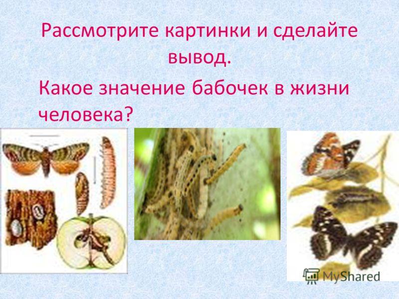 Рассмотрите картинки и сделайте вывод. Какое значение бабочек в жизни человека?