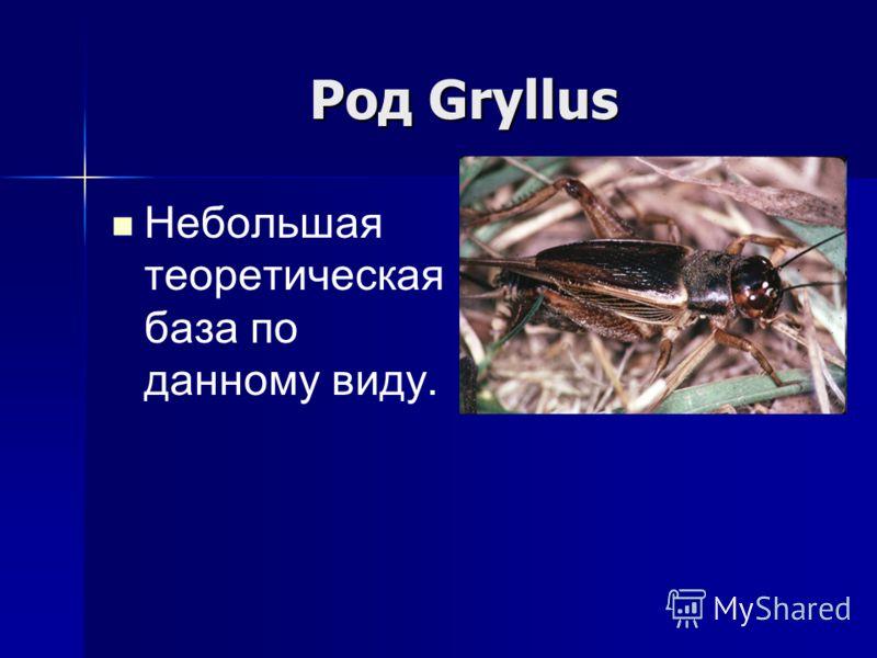 Род Gryllus Небольшая теоретическая база по данному виду.