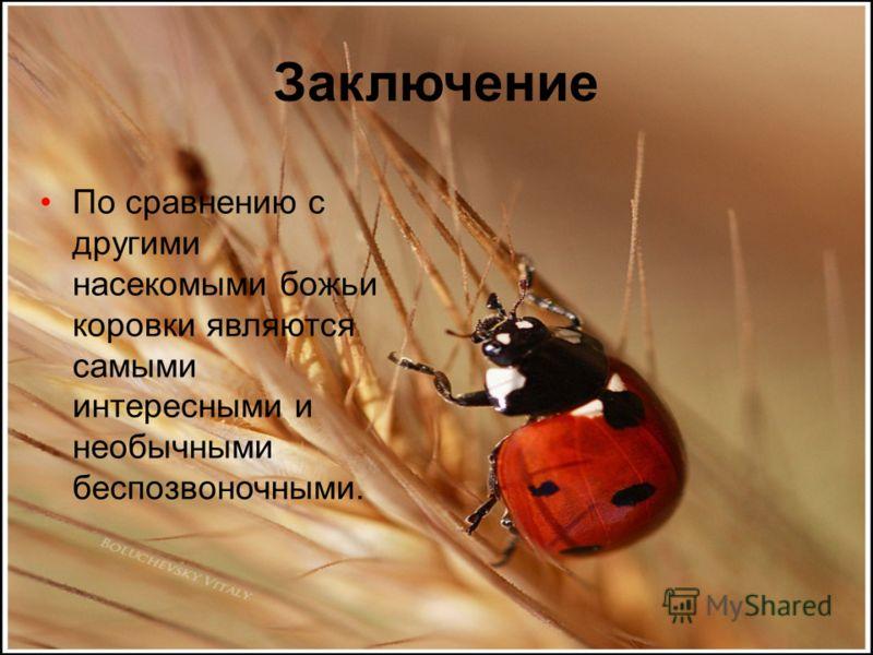 Заключение По сравнению с другими насекомыми божьи коровки являются самыми интересными и необычными беспозвоночными.