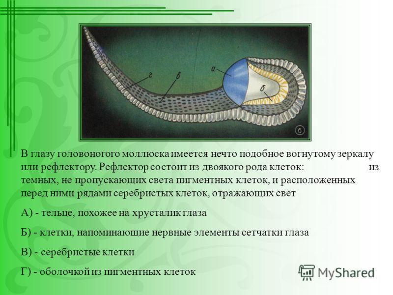 В глазу головоногого моллюска имеется нечто подобное вогнутому зеркалу или рефлектору. Рефлектор состоит из двоякого рода клеток: из темных, не пропускающих света пигментных клеток, и расположенных перед ними рядами серебристых клеток, отражающих све