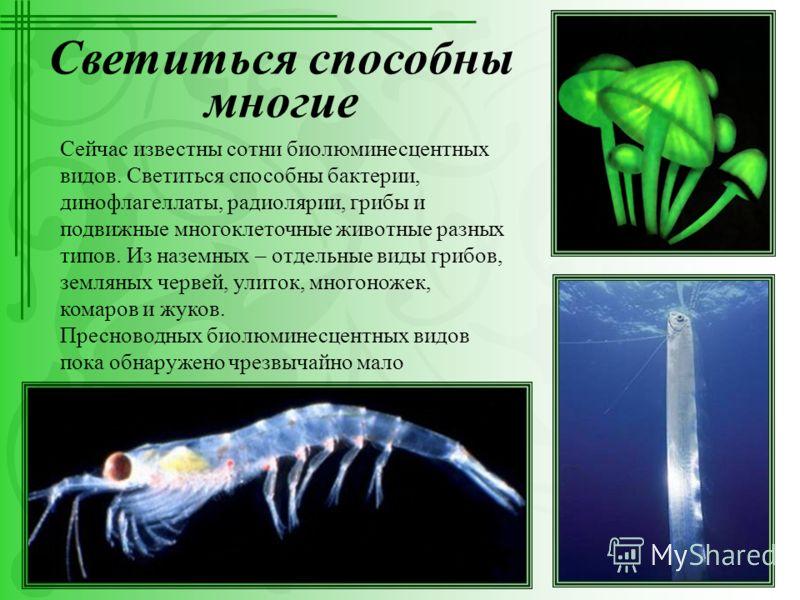 Светиться способны многие Сейчас известны сотни биолюминесцентных видов. Светиться способны бактерии, динофлагеллаты, радиолярии, грибы и подвижные многоклеточные животные разных типов. Из наземных – отдельные виды грибов, земляных червей, улиток, мн