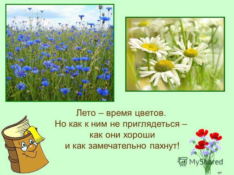Лето – время цветов. Но как к ним не приглядеться – как они хороши и как замечательно пахнут!