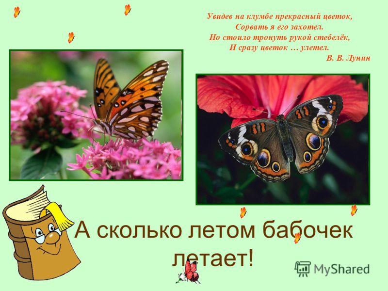 А сколько летом бабочек летает! Увидев на клумбе прекрасный цветок, Сорвать я его захотел. Но стоило тронуть рукой стебелёк, И сразу цветок … улетел. В. В. Лунин