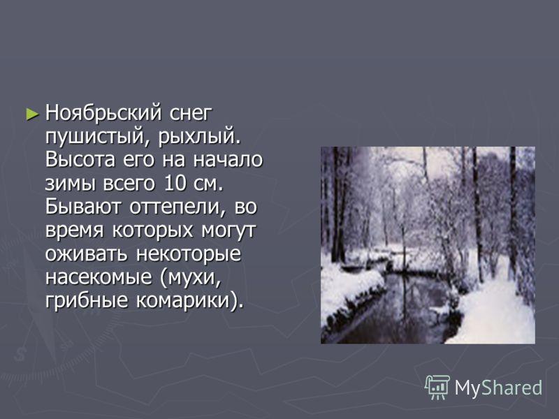 Ноябрьский снег пушистый, рыхлый. Высота его на начало зимы всего 10 см. Бывают оттепели, во время которых могут оживать некоторые насекомые (мухи, грибные комарики). Ноябрьский снег пушистый, рыхлый. Высота его на начало зимы всего 10 см. Бывают отт