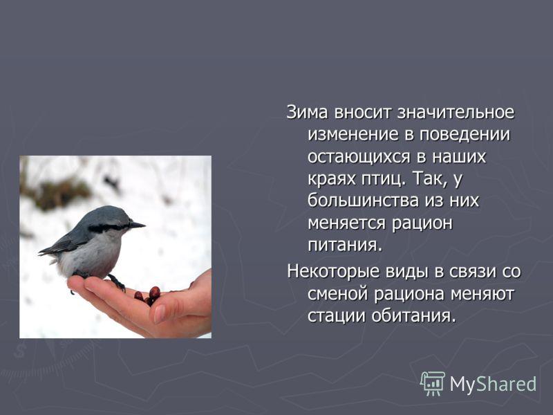 Зима вносит значительное изменение в поведении остающихся в наших краях птиц. Так, у большинства из них меняется рацион питания. Некоторые виды в связи со сменой рациона меняют стации обитания.