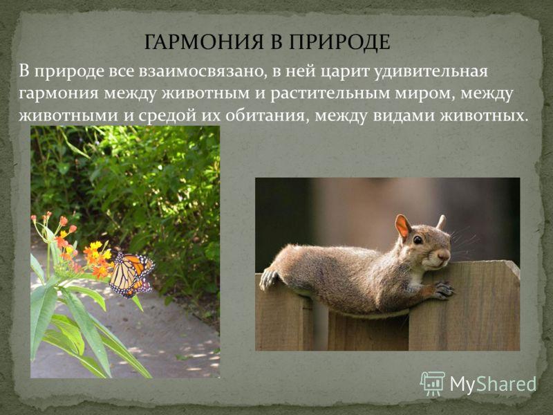ГАРМОНИЯ В ПРИРОДЕ В природе все взаимосвязано, в ней царит удивительная гармония между животным и растительным миром, между животными и средой их обитания, между видами животных.