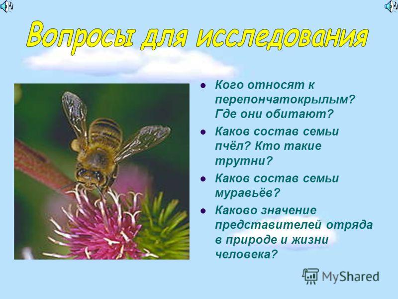 Кого относят к перепончатокрылым? Где они обитают? Каков состав семьи пчёл? Кто такие трутни? Каков состав семьи муравьёв? Каково значение представителей отряда в природе и жизни человека?