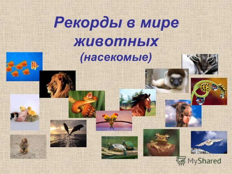 Рекорды в мире животных (насекомые)