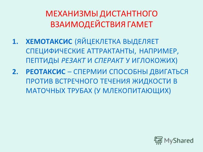 МЕХАНИЗМЫ ДИСТАНТНОГО ВЗАИМОДЕЙСТВИЯ ГАМЕТ 1.ХЕМОТАКСИС (ЯЙЦЕКЛЕТКА ВЫДЕЛЯЕТ СПЕЦИФИЧЕСКИЕ АТТРАКТАНТЫ, НАПРИМЕР, ПЕПТИДЫ РЕЗАКТ И СПЕРАКТ У ИГЛОКОЖИХ) 2.РЕОТАКСИС – СПЕРМИИ СПОСОБНЫ ДВИГАТЬСЯ ПРОТИВ ВСТРЕЧНОГО ТЕЧЕНИЯ ЖИДКОСТИ В МАТОЧНЫХ ТРУБАХ (У М