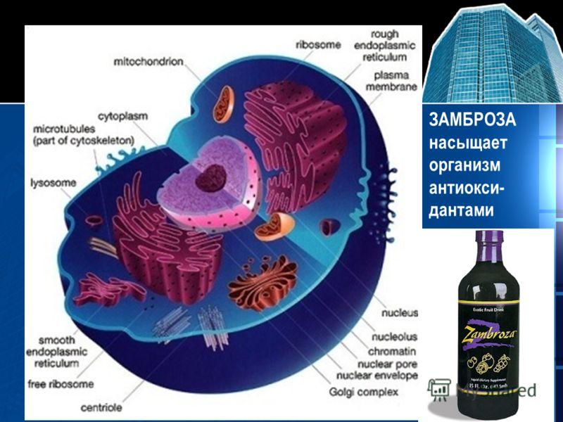 ЗАМБРОЗА насыщает организм антиокси- дантами