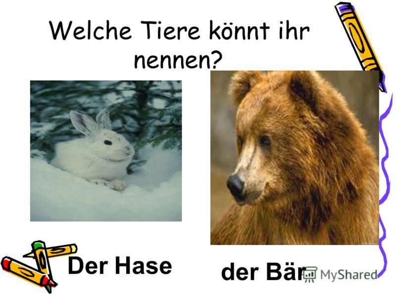 Welche Tiere könnt ihr nennen? Der Hase der Bär