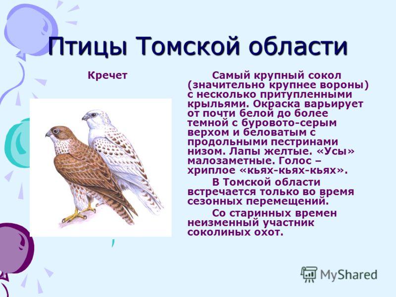 Птицы Томской области КречетСамый крупный сокол (значительно крупнее вороны) с несколько притупленными крыльями. Окраска варьирует от почти белой до более темной с буровото-серым верхом и беловатым с продольными пестринами низом. Лапы желтые. «Усы» м