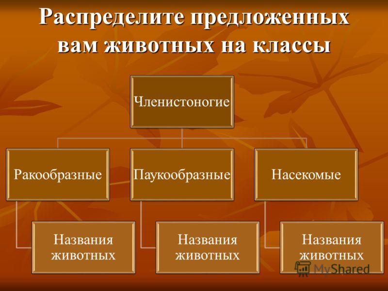 Распределите предложенных вам животных на классы Членистоногие Ракообразные Названия животных Паукообразные Названия животных Насекомые Названия животных