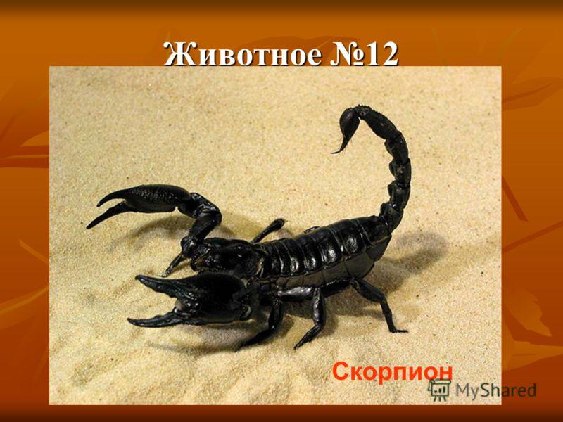 Животное 12 Скорпион