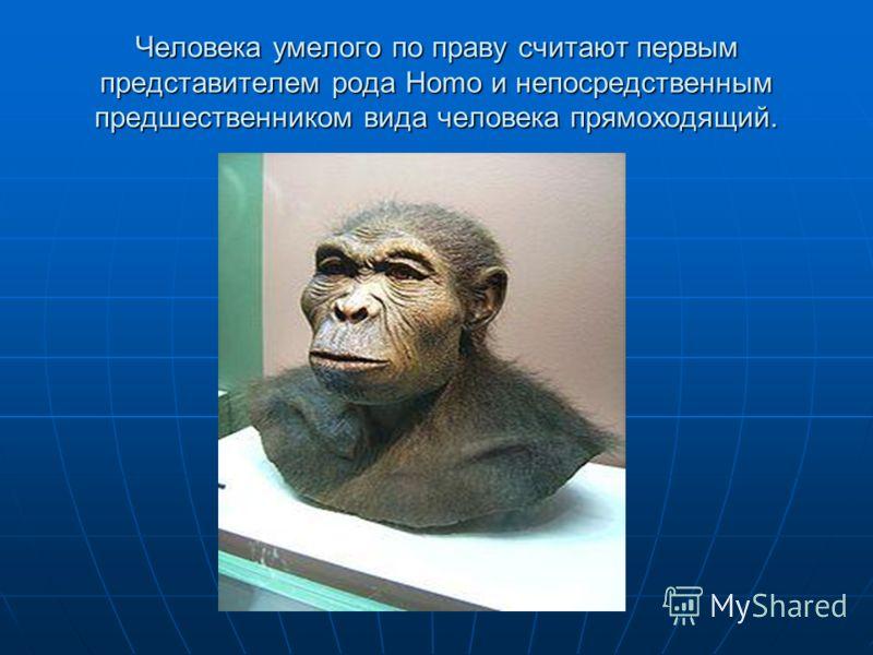Человека умелого по праву считают первым представителем рода Homo и непосредственным предшественником вида человека прямоходящий.