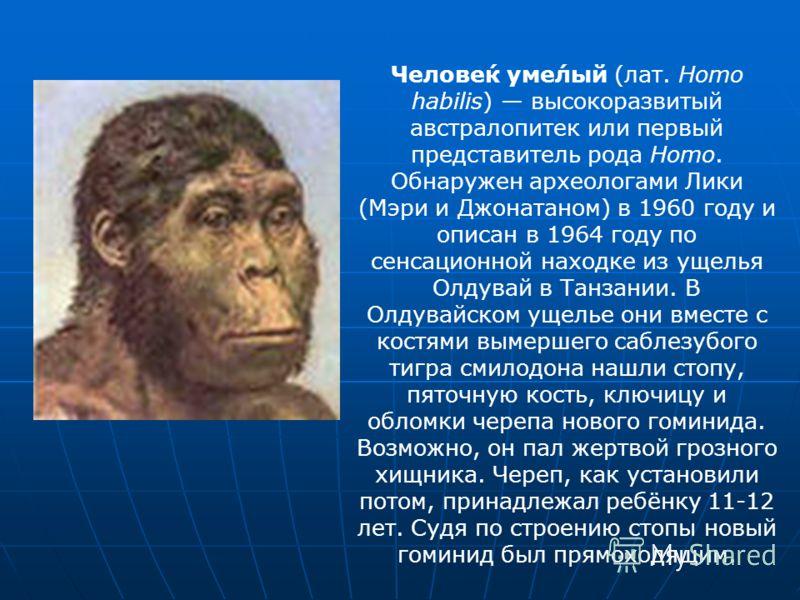Челове́к уме́лый (лат. Homo habilis) высокоразвитый австралопитек или первый представитель рода Homo. Обнаружен археологами Лики (Мэри и Джонатаном) в 1960 году и описан в 1964 году по сенсационной находке из ущелья Олдувай в Танзании. В Олдувайском