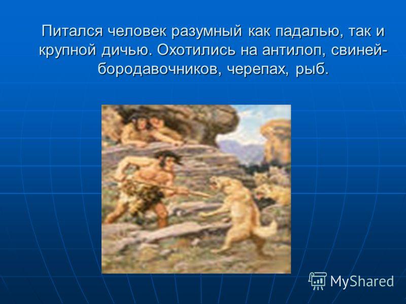Питался человек разумный как падалью, так и крупной дичью. Охотились на антилоп, свиней- бородавочников, черепах, рыб.