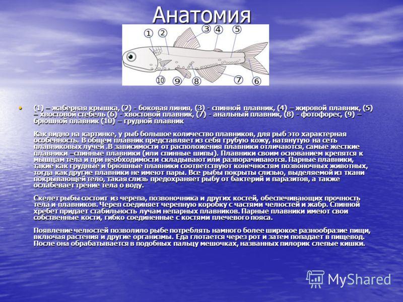 Анатомия (1) – жаберная крышка, (2) - боковая линия, (3) - спинной плавник, (4) – жировой плавник, (5) – хвостовой стебель (6) - хвостовой плавник, (7) - анальный плавник, (8) - фотофорес, (9) – брюшной плавник (10) – грудной плавник Как видно на кар