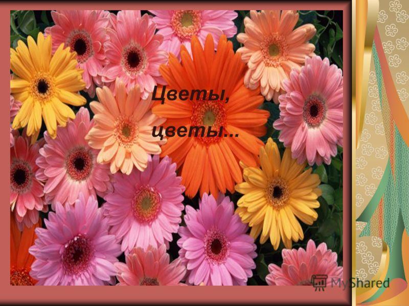 Цветы, цветы...