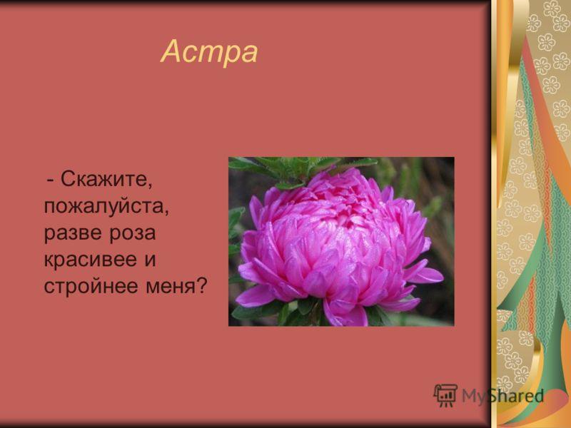 Астра - Скажите, пожалуйста, разве роза красивее и стройнее меня?