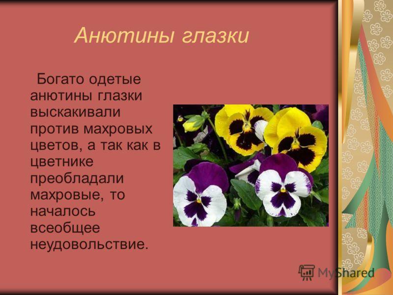 Анютины глазки Богато одетые анютины глазки выскакивали против махровых цветов, а так как в цветнике преобладали махровые, то началось всеобщее неудовольствие.