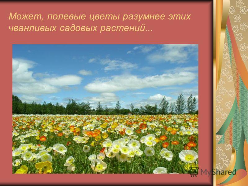 Может, полевые цветы разумнее этих чванливых садовых растений...