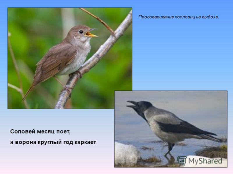 Соловей месяц поет, а ворона круглый год каркает. Проговаривание пословиц на выдохе.