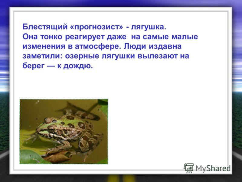 Блестящий «прогнозист» - лягушка. Она тонко реагирует даже на самые малые изменения в атмосфере. Люди издавна заметили: озерные лягушки вылезают на берег к дождю.