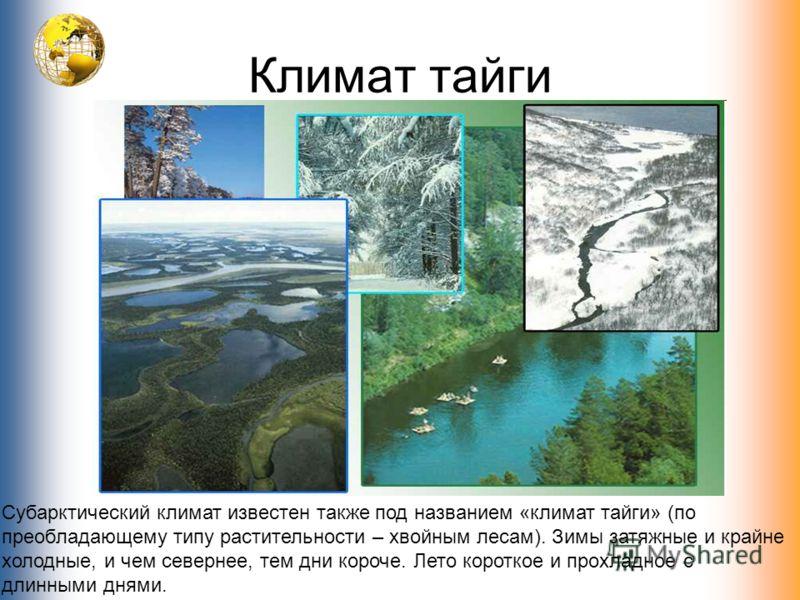 Климат тайги Субарктический климат известен также под названием «климат тайги» (по преобладающему типу растительности – хвойным лесам). Зимы затяжные и крайне холодные, и чем севернее, тем дни короче. Лето короткое и прохладное с длинными днями.