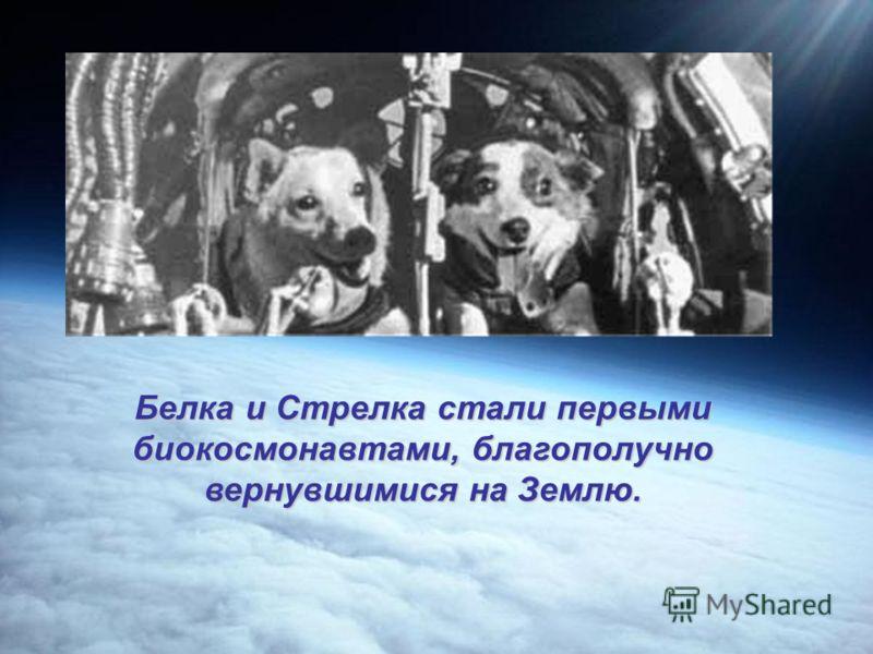Кто был первым на орбите Земли?3 ноября 1957 года был запущен второй советский искусственный спутник Земли. На его борту находился первый космический путешественник собака Лайка.
