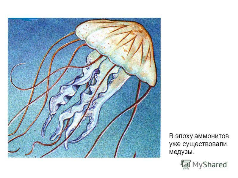 В эпоху аммонитов уже существовали медузы.