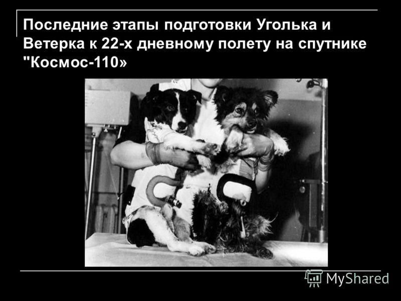 Последние этапы подготовки Уголька и Ветерка к 22-х дневному полету на спутнике Космос-110»
