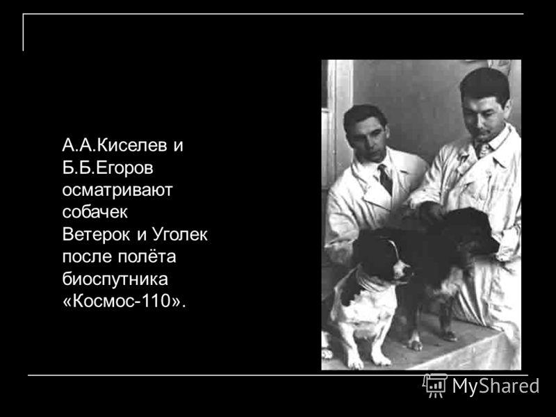 А.А.Киселев и Б.Б.Егоров осматривают собачек Ветерок и Уголек после полёта биоспутника «Космос-110».