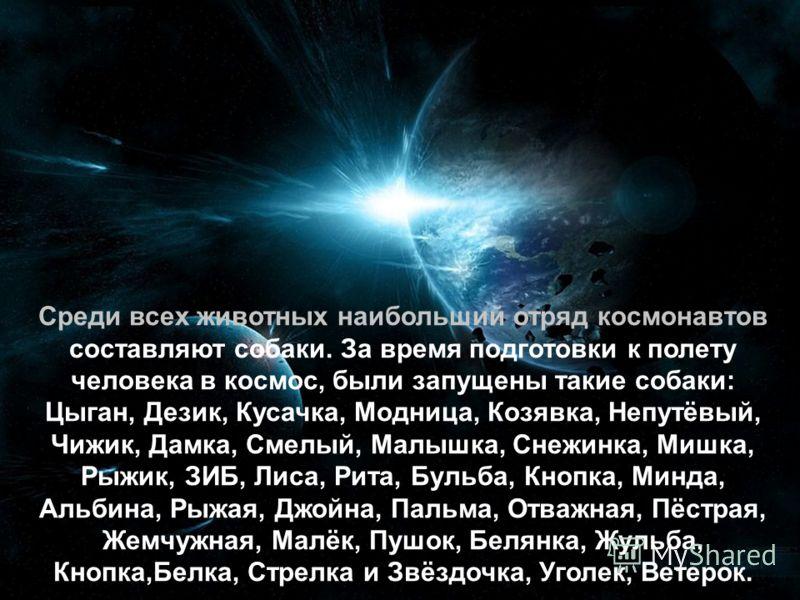 Среди всех животных наибольший отряд космонавтов составляют собаки. За время подготовки к полету человека в космос, были запущены такие собаки: Цыган, Дезик, Кусачка, Модница, Козявка, Непутёвый, Чижик, Дамка, Смелый, Малышка, Снежинка, Мишка, Рыжик,