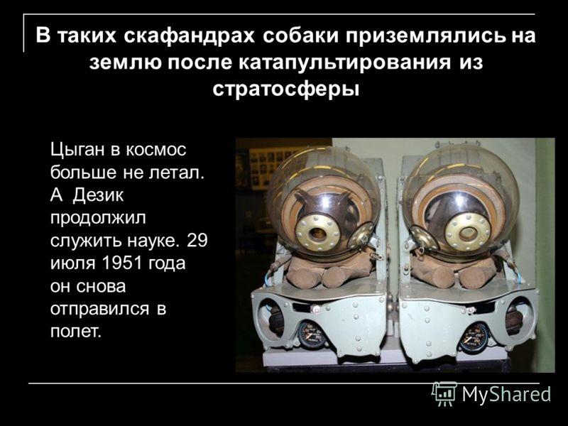 В таких скафандрах собаки приземлялись на землю после катапультирования из стратосферы Цыган в космос больше не летал. А Дезик продолжил служить науке. 29 июля 1951 года он снова отправился в полет.