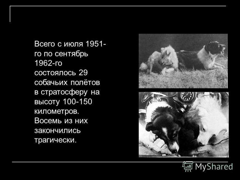 Всего с июля 1951- го по сентябрь 1962-го состоялось 29 собачьих полётов в стратосферу на высоту 100-150 километров. Восемь из них закончились трагически.