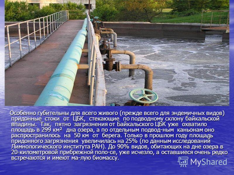 Особенно губительны для всего живого (прежде всего для эндемичных видов) придонные стоки от ЦБК, стекающие по подводному склону байкальской впадины. Так, пятно загрязнения от Байкальского ЦБК уже охватило площадь в 299 км² дна озера, а по отдельным п