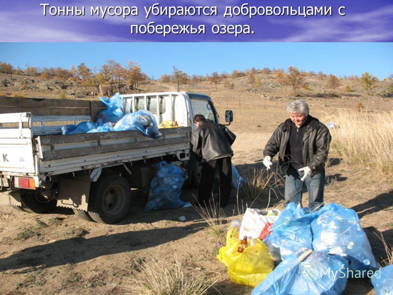 Тонны мусора убираются добровольцами с побережья озера.