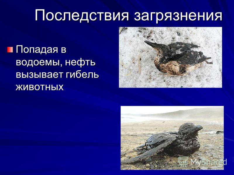 Последствия загрязнения Попадая в водоемы, нефть вызывает гибель животных