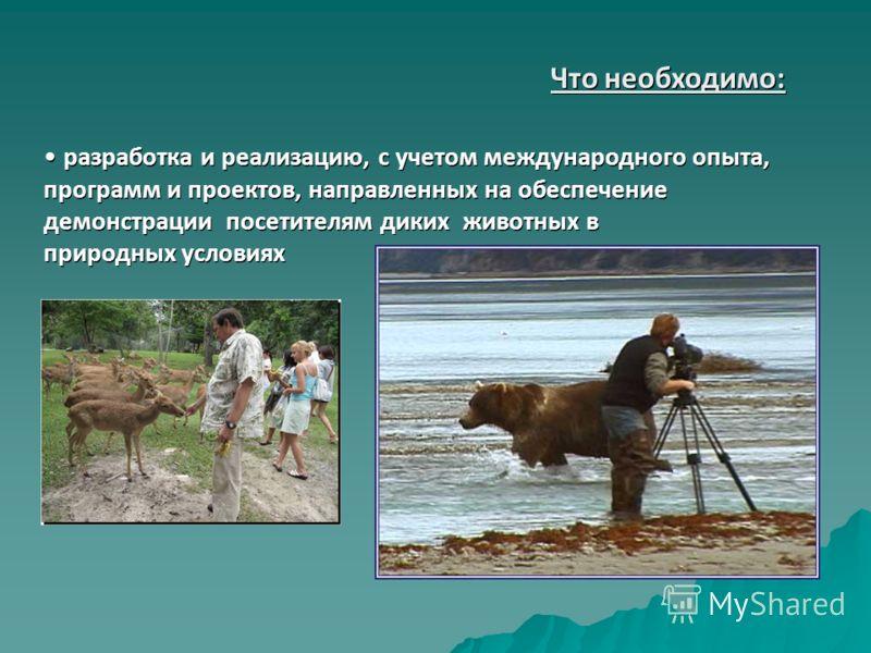 разработка и реализацию, с учетом международного опыта, программ и проектов, направленных на обеспечение демонстрации посетителям диких животных в природных условиях разработка и реализацию, с учетом международного опыта, программ и проектов, направл
