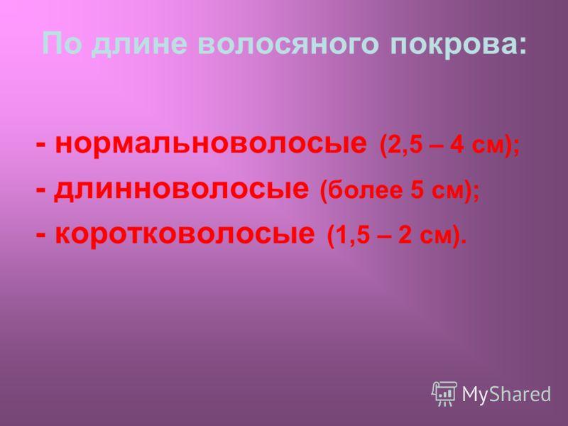 По длине волосяного покрова: - нормальноволосые (2,5 – 4 см); - длинноволосые (более 5 см); - коротковолосые (1,5 – 2 см).