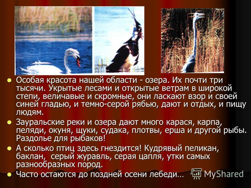 Особая красота нашей области - озера. Их почти три тысячи. Укрытые лесами и открытые ветрам в широкой степи, величавые и скромные, они ласкают взор и своей синей гладью, и темно-серой рябью, дают и отдых, и пищу людям. Особая красота нашей области -