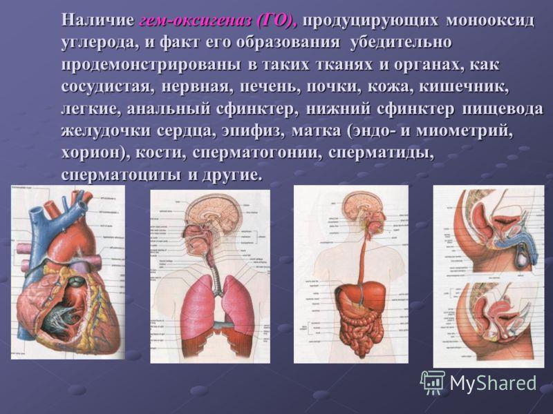 Наличие гем-оксигеназ (ГО), продуцирующих монооксид углерода, и факт его образования убедительно продемонстрированы в таких тканях и органах, как сосудистая, нервная, печень, почки, кожа, кишечник, легкие, анальный сфинктер, нижний сфинктер пищевода