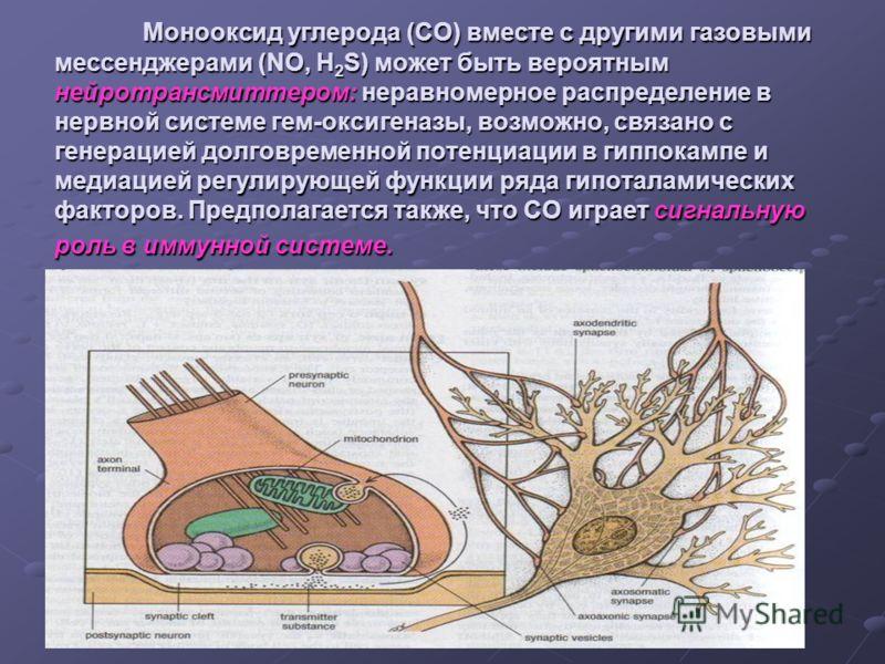 Монооксид углерода (СО) вместе с другими газовыми мессенджерами (NO, H 2 S) может быть вероятным нейротрансмиттером: неравномерное распределение в нервной системе гем-оксигеназы, возможно, связано с генерацией долговременной потенциации в гиппокампе