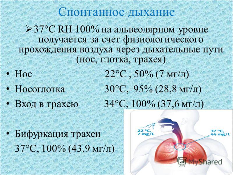 Спонтанное дыхание 37°C RH 100% на альвеолярном уровне получается за счет физиологического прохождения воздуха через дыхательные пути (нос, глотка, трахея) Нос 22°C, 50% (7 мг/л) Носоглотка 30°C, 95% (28,8 мг/л) Вход в трахею 34°C, 100% (37,6 мг/л) Б