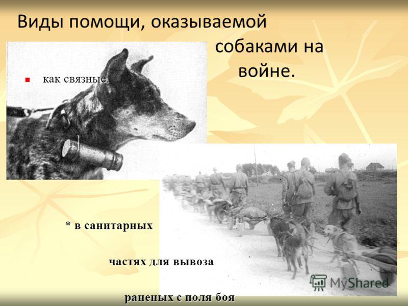как связные. как связные. * в санитарных * в санитарных частях для вывоза частях для вывоза раненых с поля боя раненых с поля боя Виды помощи, оказываемой собаками на войне.