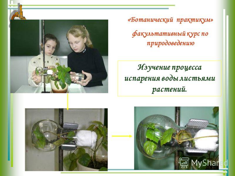 Изучение процесса испарения воды листьями растений. «Ботанический практикум» факультативный курс по природоведению