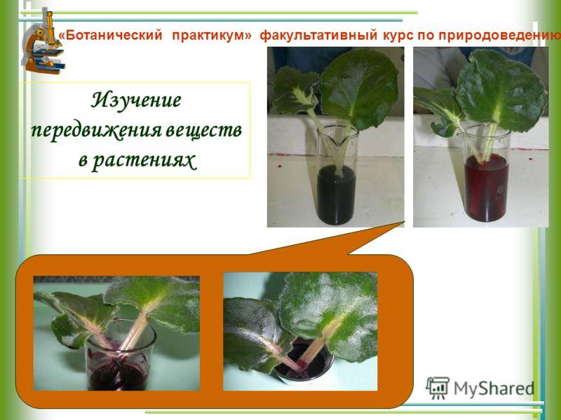 Изучение передвижения веществ в растениях «Ботанический практикум» факультативный курс по природоведению