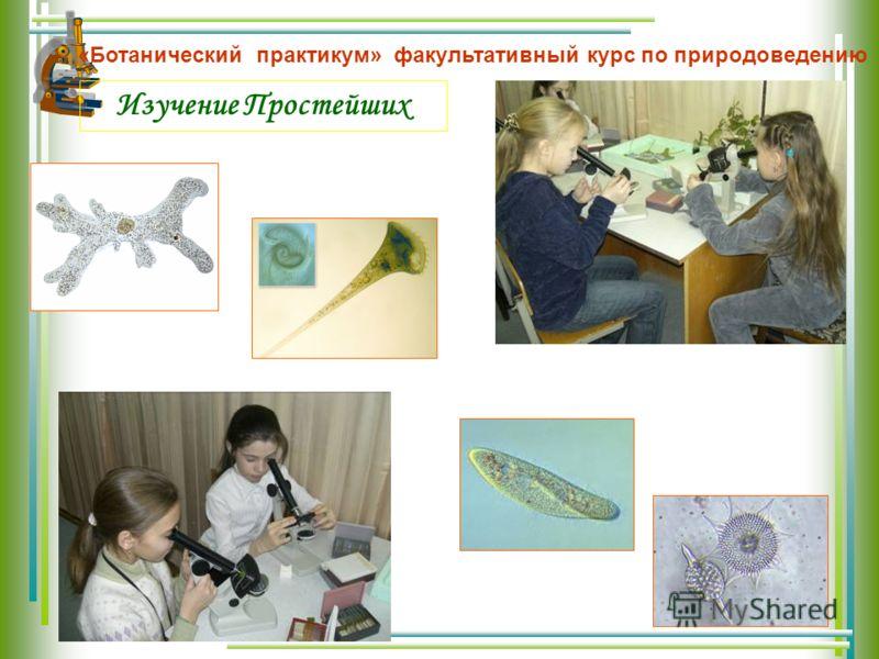 Изучение Простейших «Ботанический практикум» факультативный курс по природоведению